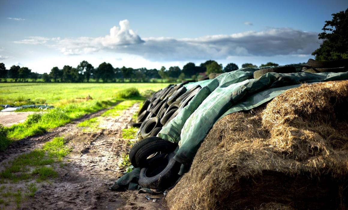 Leica M9 Farm L1012019