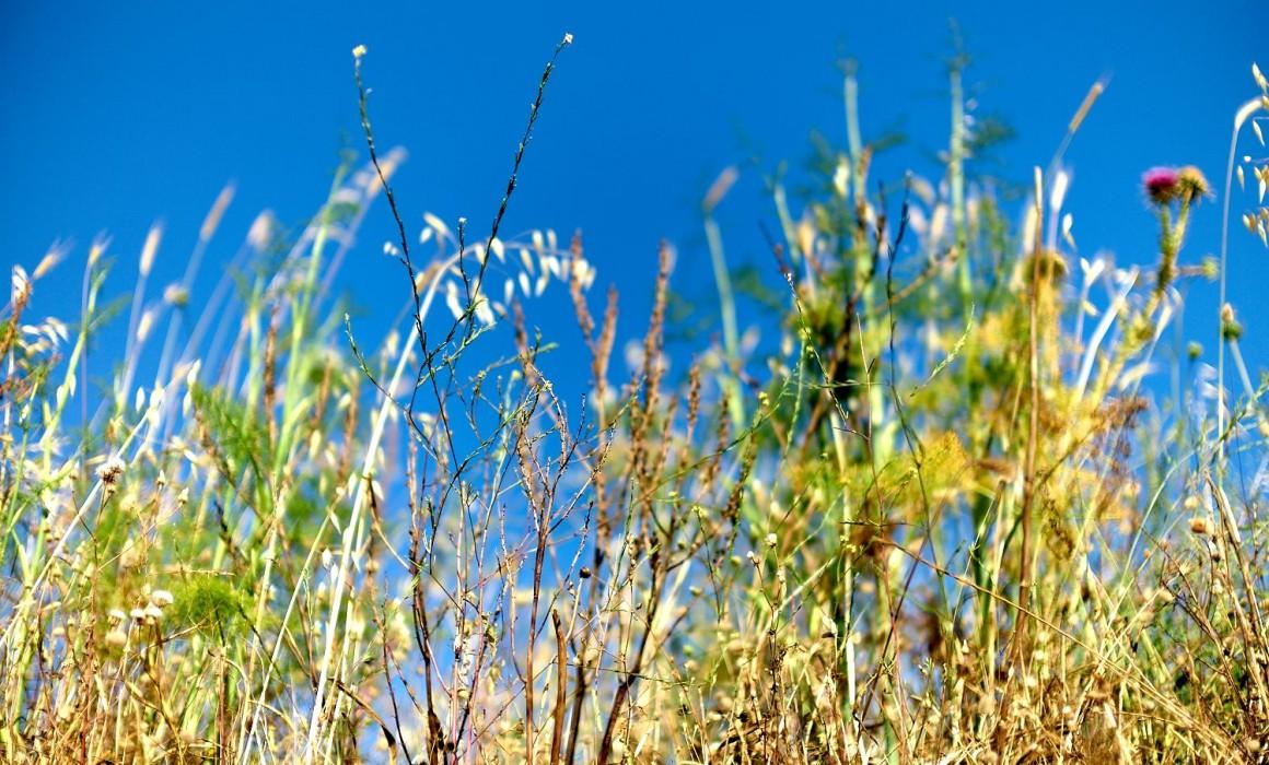 Leica Noctilux  L1005436